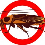 bug extermination, outdoor pest control, ant control, roach control, land o lakes, lutz, Wesley chapel, trinity, florida
