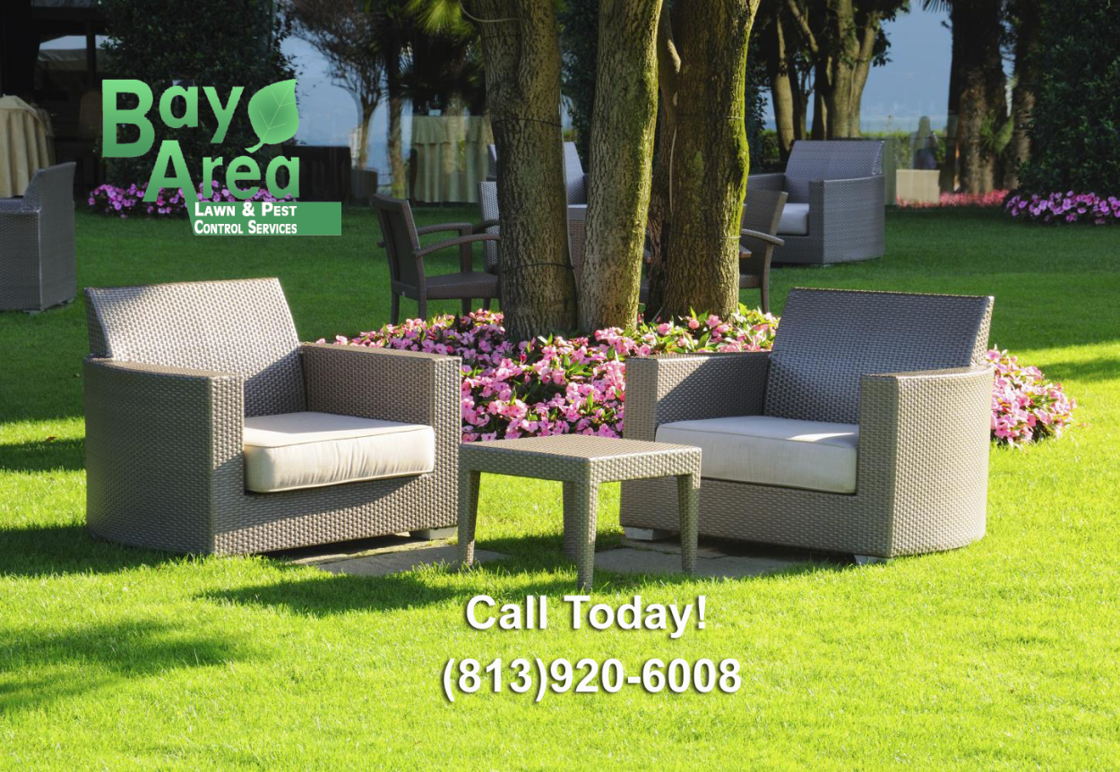 Contact Bay Area Lawn and Pest Control Services, for service in Land O Lakes, Trinity, Wesley Chapel, Oldsmar, New Tampa, FL