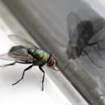 outdoor-pest-control-landolakesflorida