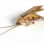 cockroach exterminator, Lutz, Land O Lakes, Carollwood, Wesley Chapel