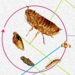 cat flea treatment land o lakes pest control
