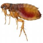 pest control land o lakes fl, flea control and exterminators, Pasco countyr