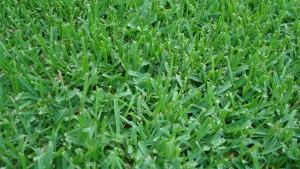 lawn spraying, pest control Trinity, Fl