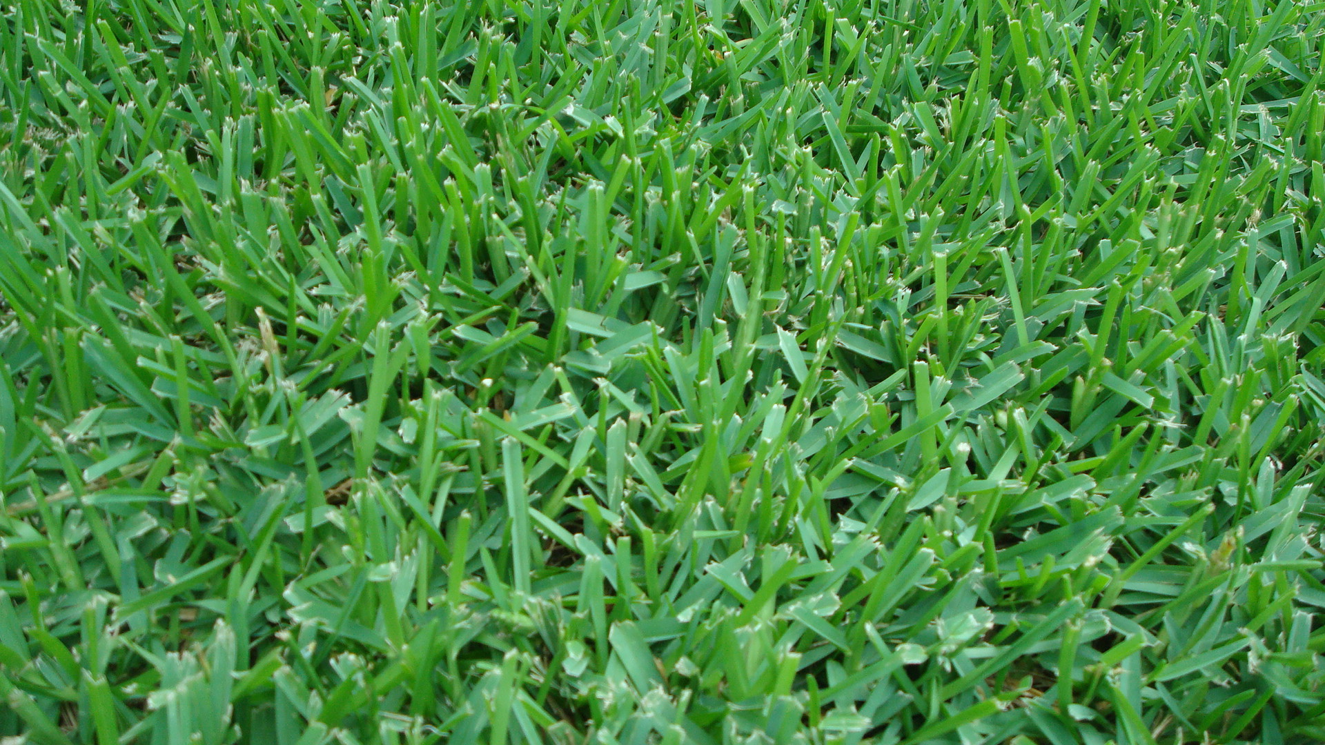 Saint Augustine Grass & Lawn Spraying